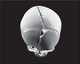 تصویر سه بعدی ساخته شده کامپیوتری