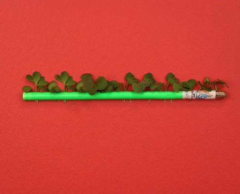 مداد جوانه