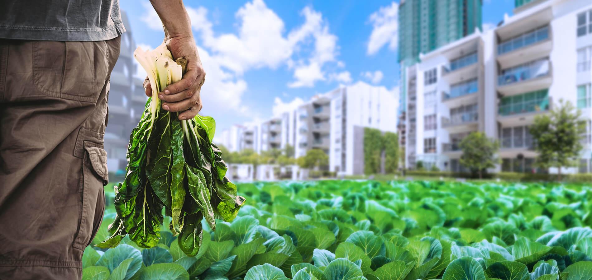 باغبانی شهری و کشاورزی شهری