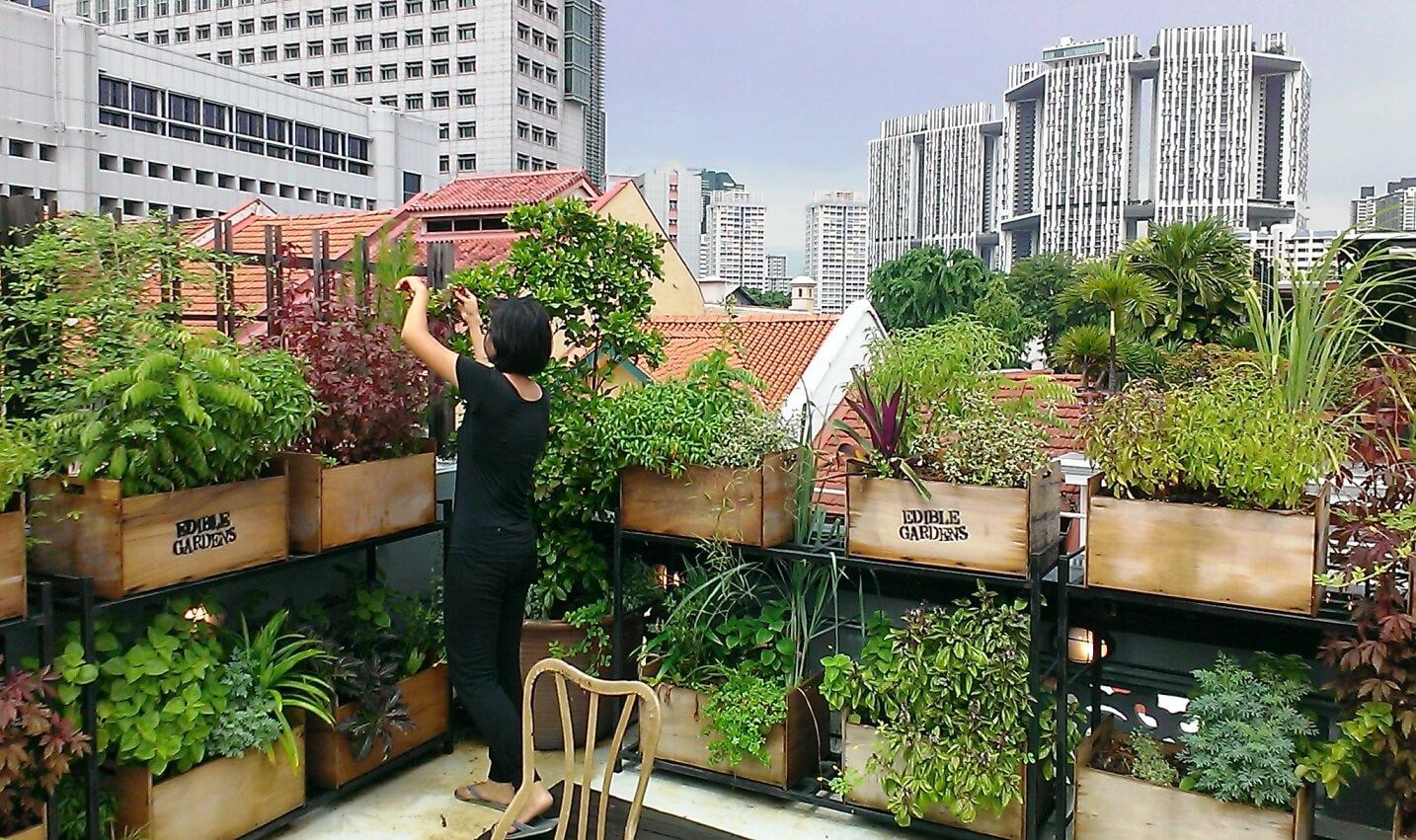 کشاورزی شهری