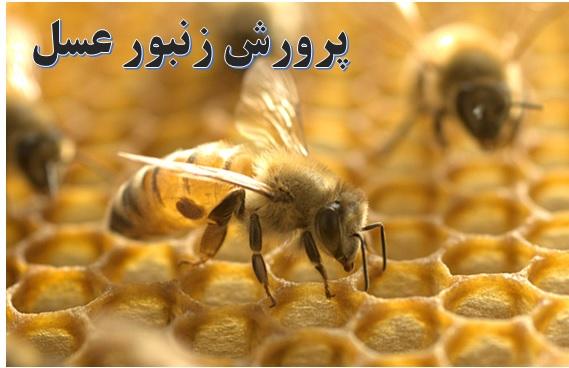 پرورش زنبور عسل ✔️ معایب زنبورداری ✔️ مراحل راه اندازی زنبورداری ✔️ مراحل راه اندازی زنبورداری ✔️ نحوه تولید ژله رویال ✔️ زنبورعسل و پرورش آن ✔️ طرح پرورش ملکه ✔️ مشکلات پرورش زنبور عسل ✔️ زنبورعسل و پرورش آن ✔️ شرایط محیطی پرورش زنبورعسل