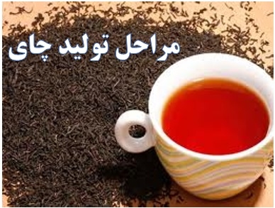 تولید چای صنعتی ✔️ کارگاه تولید چای ✔️ خط تولید چای ✔️ طرح توجیهی چای ✔️ مراحلتولید چای✔️خط بسته بندی چای ✔️ هزینه احداث کارخانه چای ✔️ طرح توجیهی بسته بندیچای