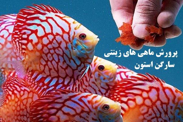 ✔️ مزایا و معایب پرورش ماهی های زینتی✔️ تکثیر ماهی های زینتی ✔️ پرورش ماهی های زینتی ✔️ فروشگاه های ماهی های زینتی ✔️ محیط پرورش ماهی ها ✔️ مجوزهای پرورش حیوانات