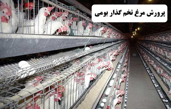 ✔️ پرورش مرغ تخم گذار بومی✔️ لوازم مرغداری ✔️ مشکلات پرورش مرغ تخم گذار بومی ✔️ سرمایه گذاری ✔️ خرید جوجه ✔️ مرغ های تخم گذار بومی ✔️ مرغ های تخم گذار و بالغ ✔️ بیماری های مرغ تخم گذار بومی