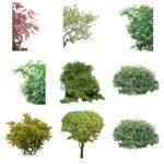 آبجکت درخت پست پروداکشن فتوشاپ